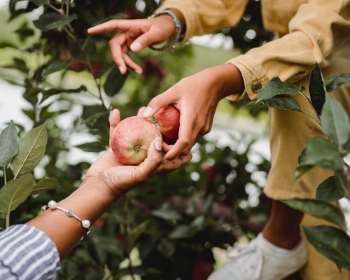 Hand offering apples to another