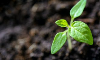 Plant sprouting through earth